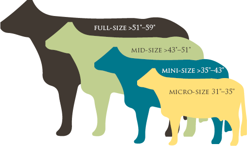 Size Classifications